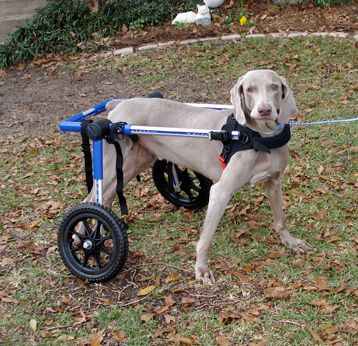 disabled-pets-abbey